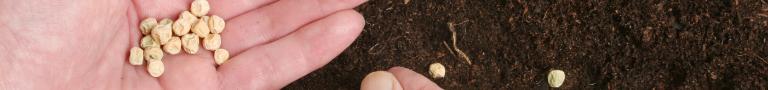 Semillas y Abono
